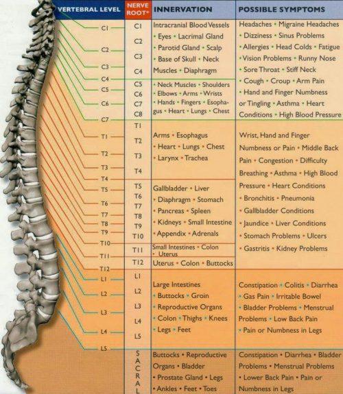 chiropractic nerve chart